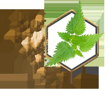 teo homepage ingredients nettle hexagon - Съставки