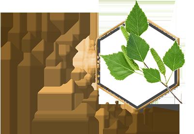 teo homepage ingredients birch hexagon - Съставки